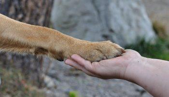 Hundeschule Grundlagentraining