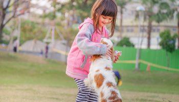 Animal Child Contact 332974