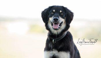 Pfotenrevier Hundeschule Moira Portrait