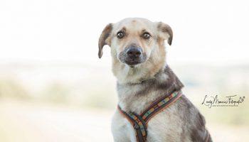 Pfotenrevier Hundeschule Nala Portrait