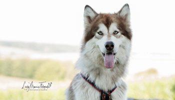 Pfotenrevier Hundeschule Toruq Portrait